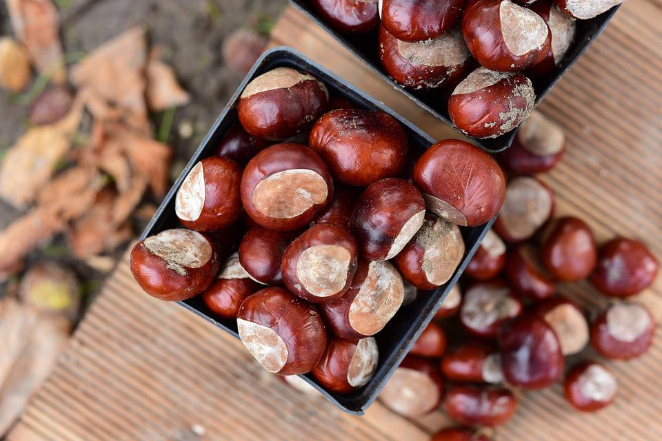 Chestnuts, Autumn, Chestnut, Nature, Brown, In The Fall
