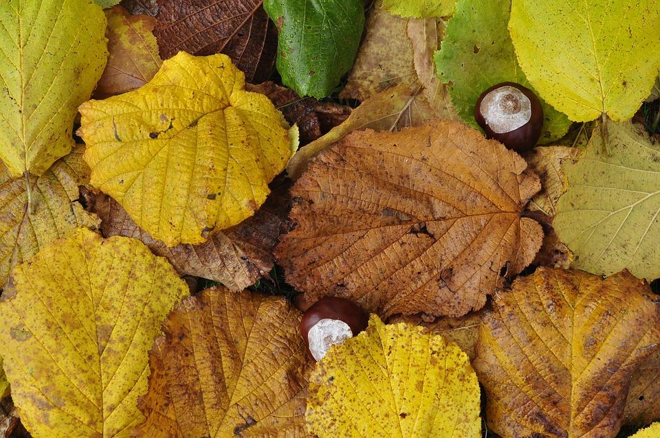 Leaves, Autumn, Chestnut, Forest Floor