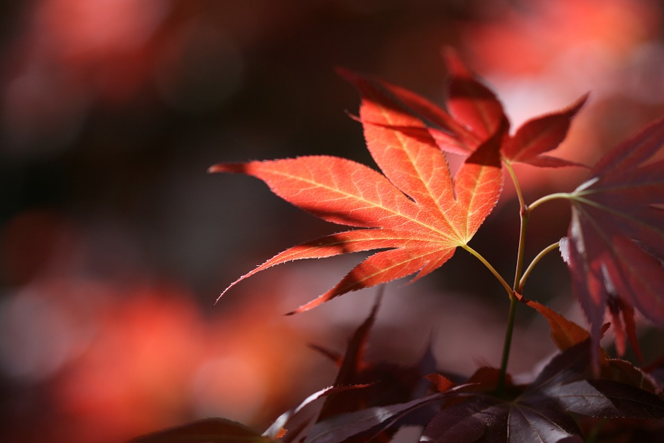 Autumn, Leaves, Forest, Nature, Chestnut Leaves