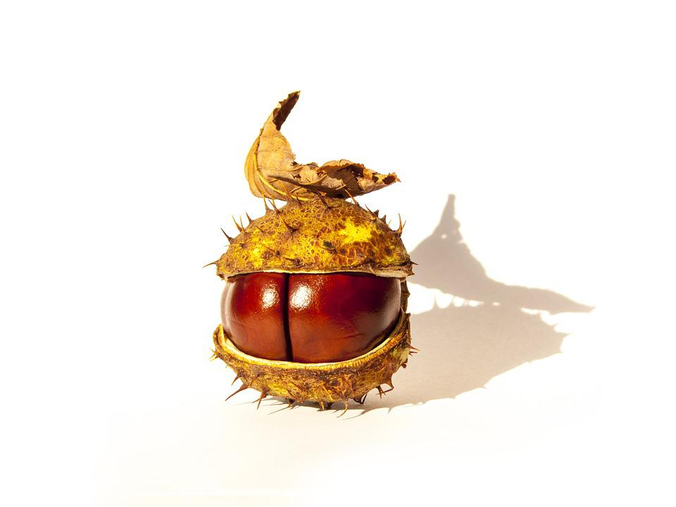 Chestnut, Chestnut With A Leaf, Lone Chestnut