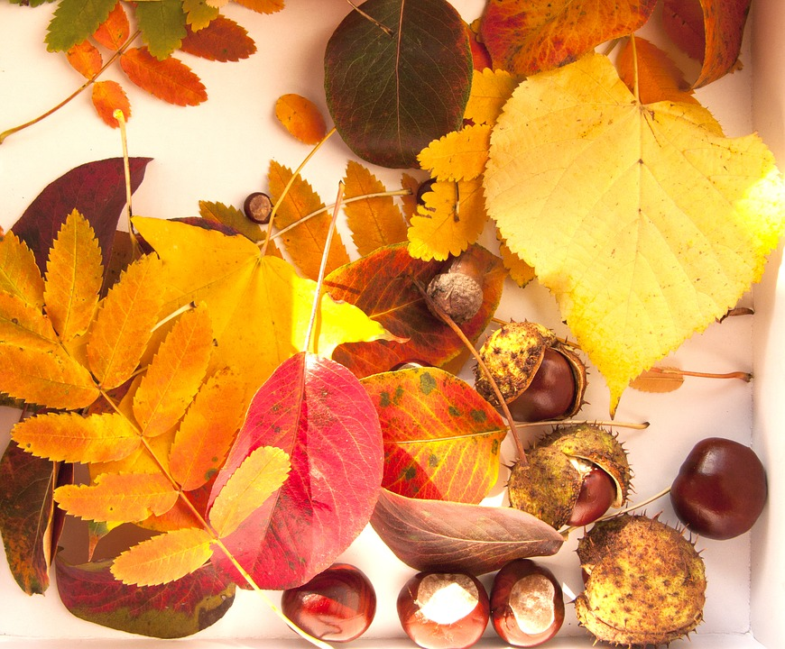 Bright Autumn, Chestnuts, Leaves, Yellow