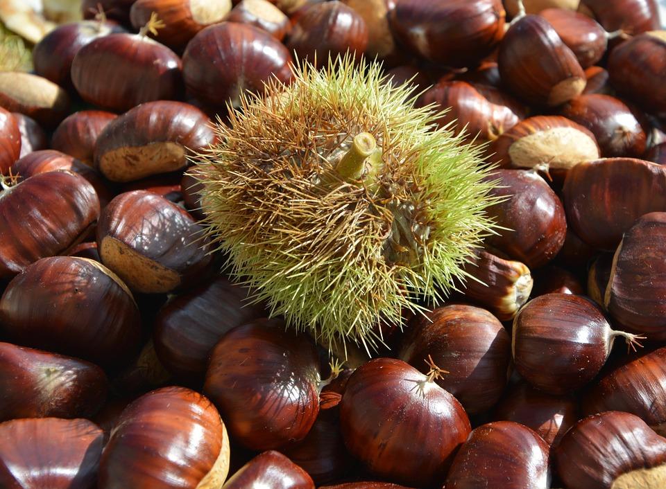 Chestnuts, Bug, Bug Thorny, Shell Thorny, Spicy, Field