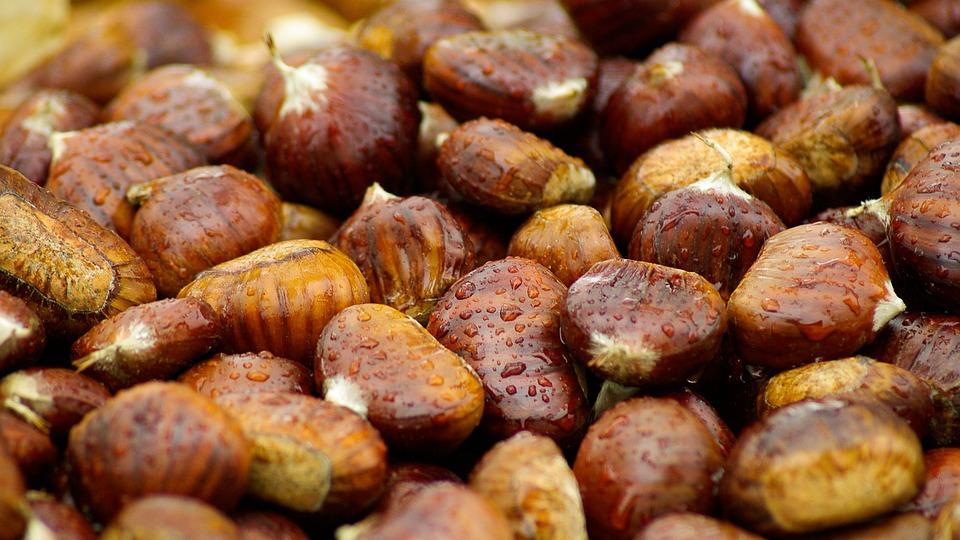 Chestnuts, Fall, Brown, Raindrops
