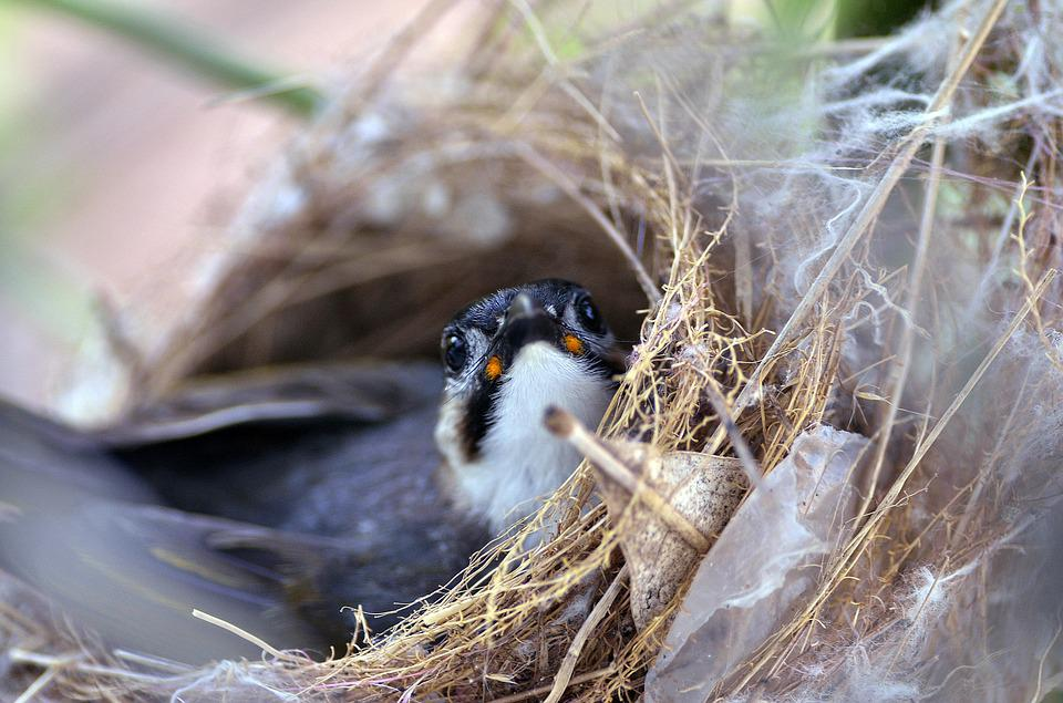 Wildlife, Bird, Nest, Outdoors, Nature, Chick, Animal