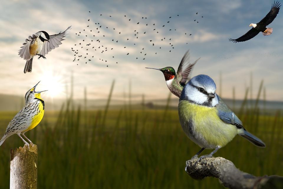 Birds, Eagle, Bald Eagle, Chickadee, Meadowlark, Animal