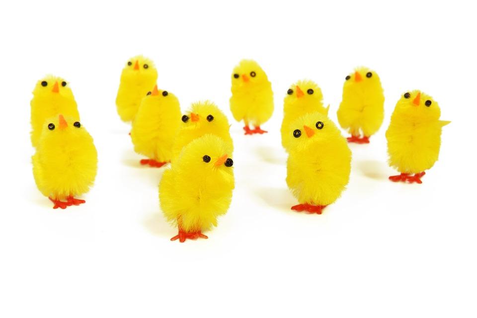 Adorable, Animal, Baby, Bird, Chick, Chicken, Cute