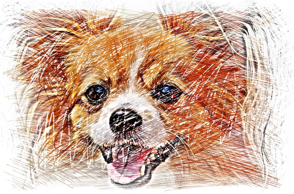 Drawing, Dog, Chihuahua, Color, Animal, Portrait