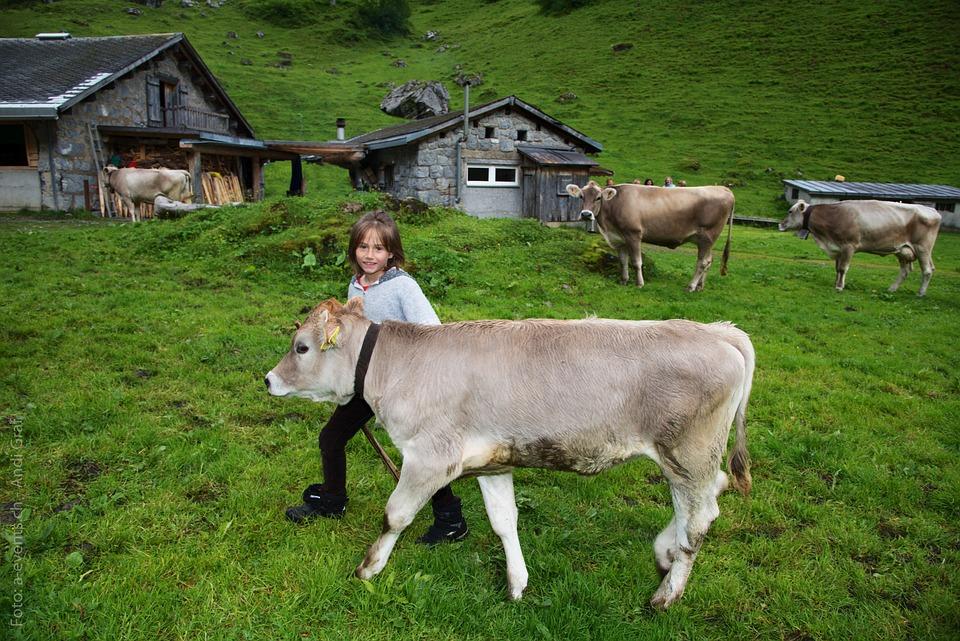 Child, Calf, Alpine Pasture, Cow, Switzerland