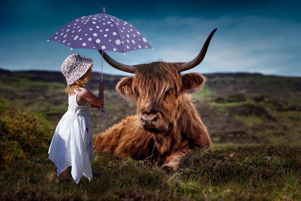 Child, Cow, Umbrella, Decoration, Room