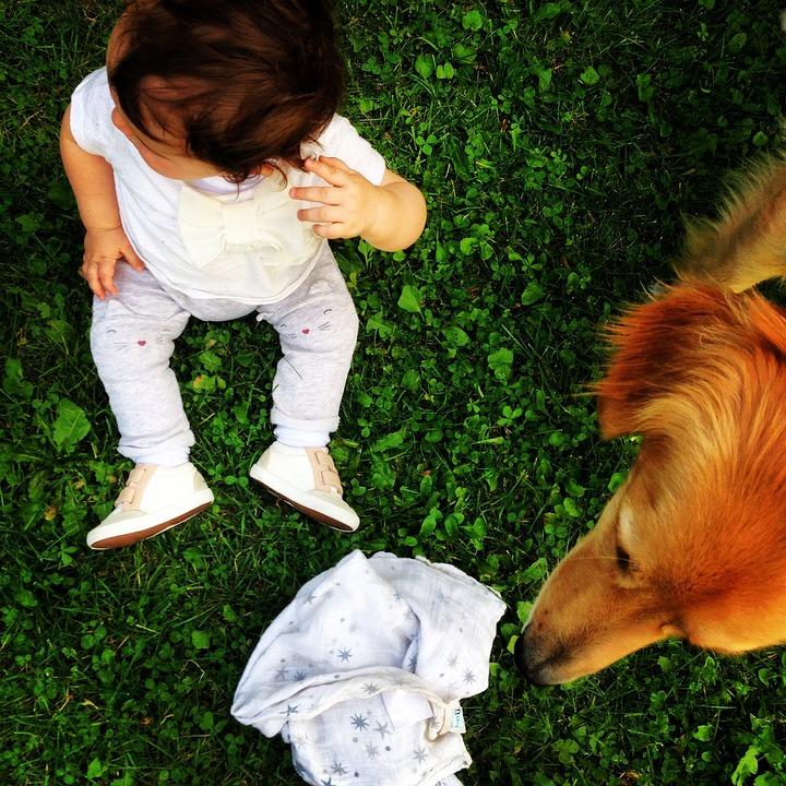 Child, Dog, Grass, Hovawart, Sitting, Summer