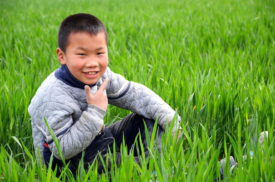 Portrait, Child, In Wheat Field