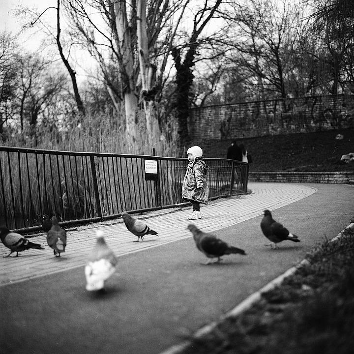 Little Girl, Pigeons, Girl, Child, Little, Park, Nature