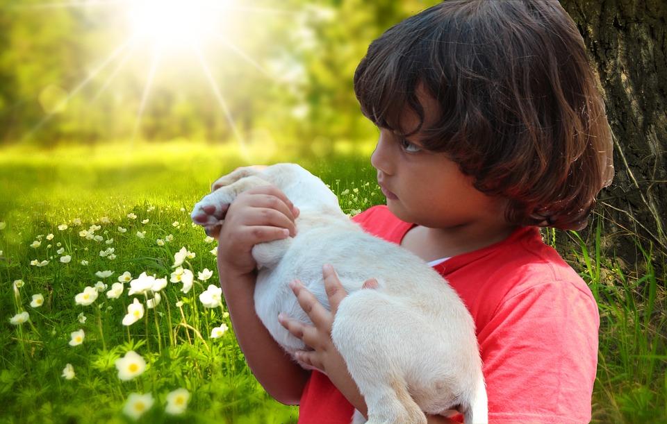 Child, Puppy, Meadow, Spring, Labrador, Small, Dog