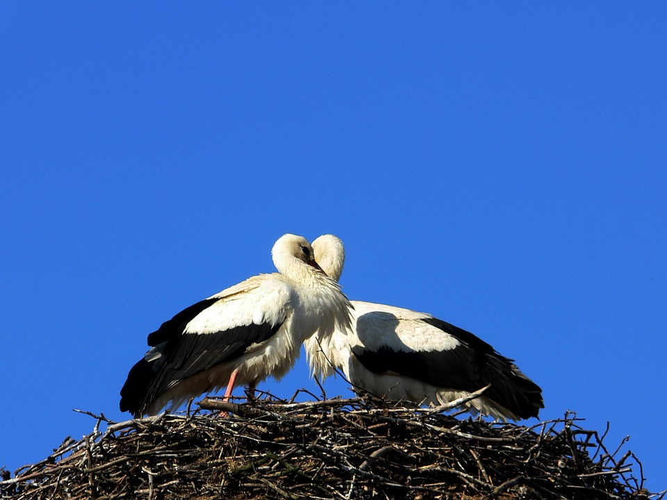 free photo child symbol baby storks birth heart in love max pixel