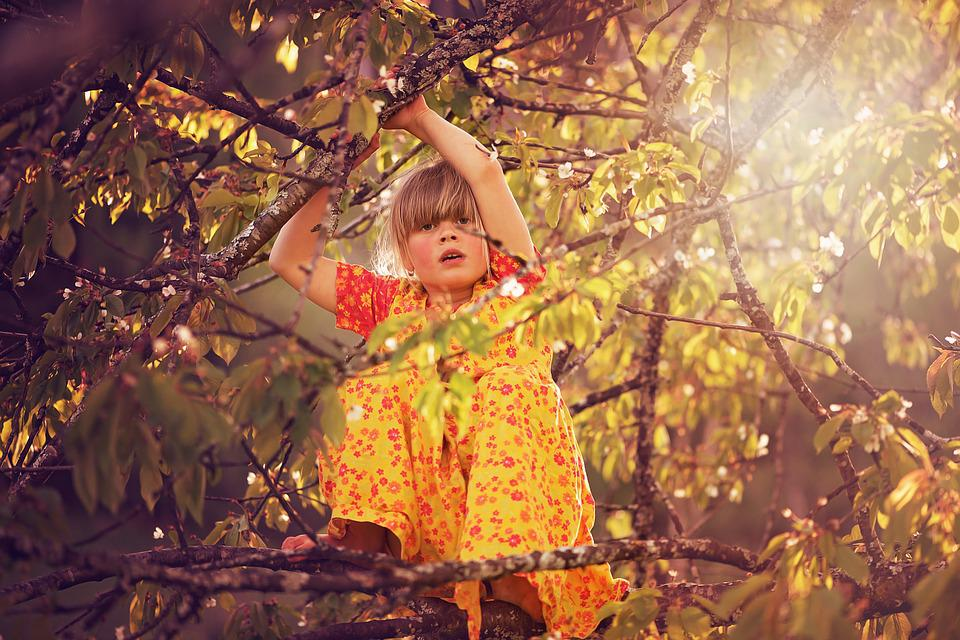 Person, Human, Child, Girl, Tree, Climb, Climbing Tree