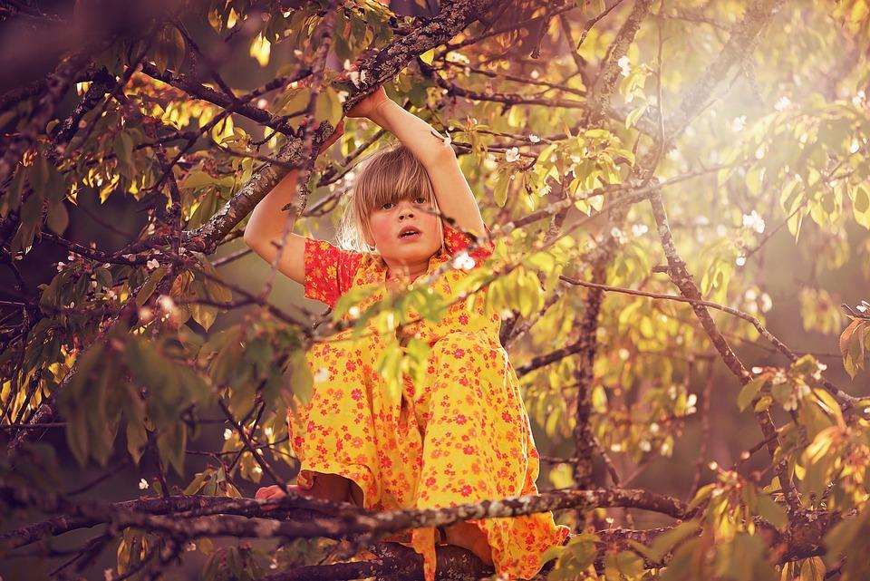 Person, Human, Child, Girl, Tree, Climb, Climbing Tree