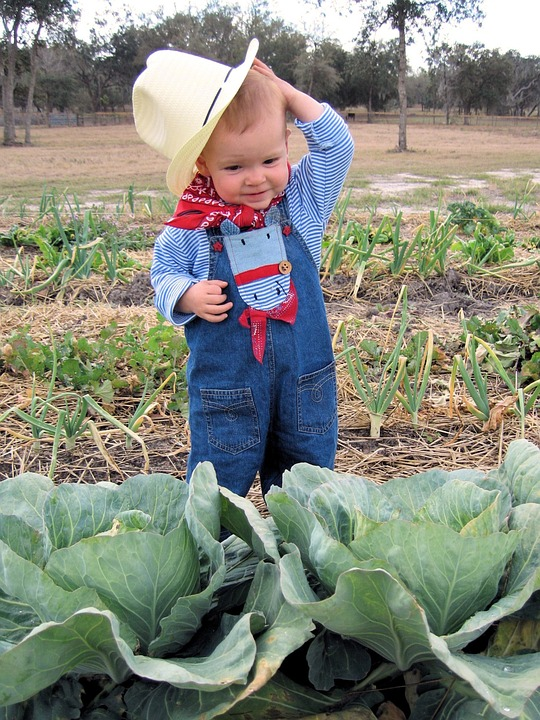 Farmer, Child, Cabbage, Childhood, Cowgirl, Hat, Cute