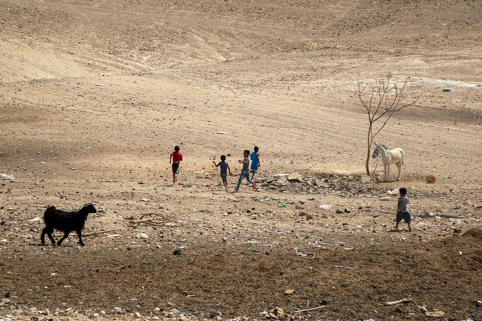 Children, Desert, Rocks, Tree, Donkey, Animal, Nomads