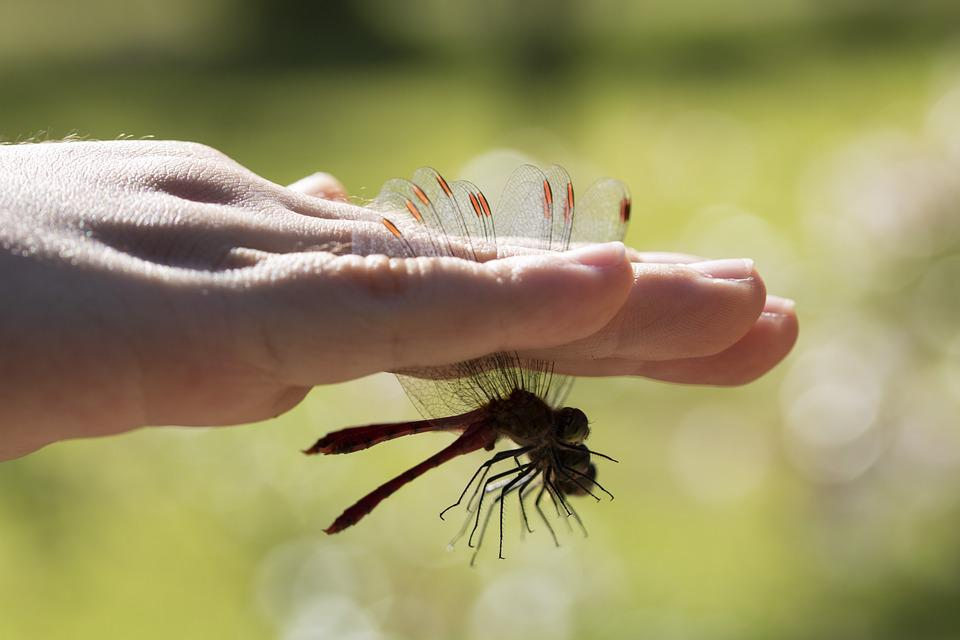 Dragonfly, Insects, Children's, Wing, Nature, Hand