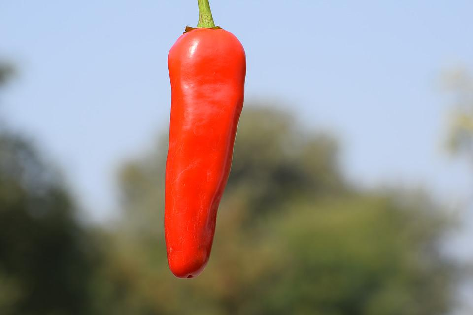 Red, Chili, Fresh, Edible, Food, Pepper, Cooking, Spice