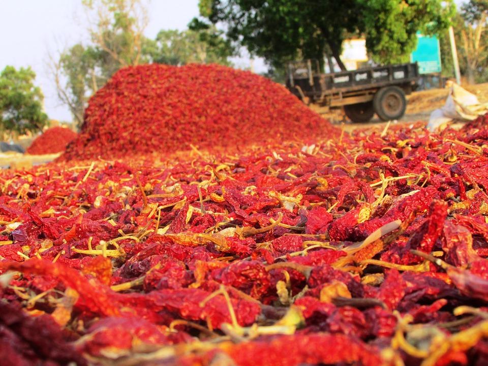 Chili Pepper, Chile Pepper, Chilli Pepper, Fruit