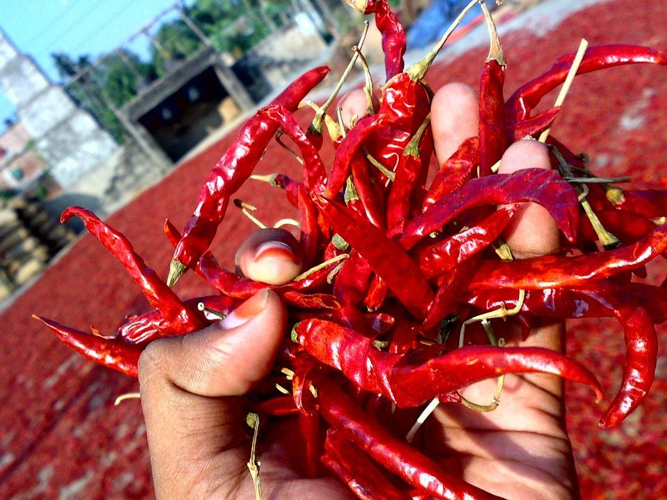 Chili, Red-chili, Dry Chili, Chili Drying Field