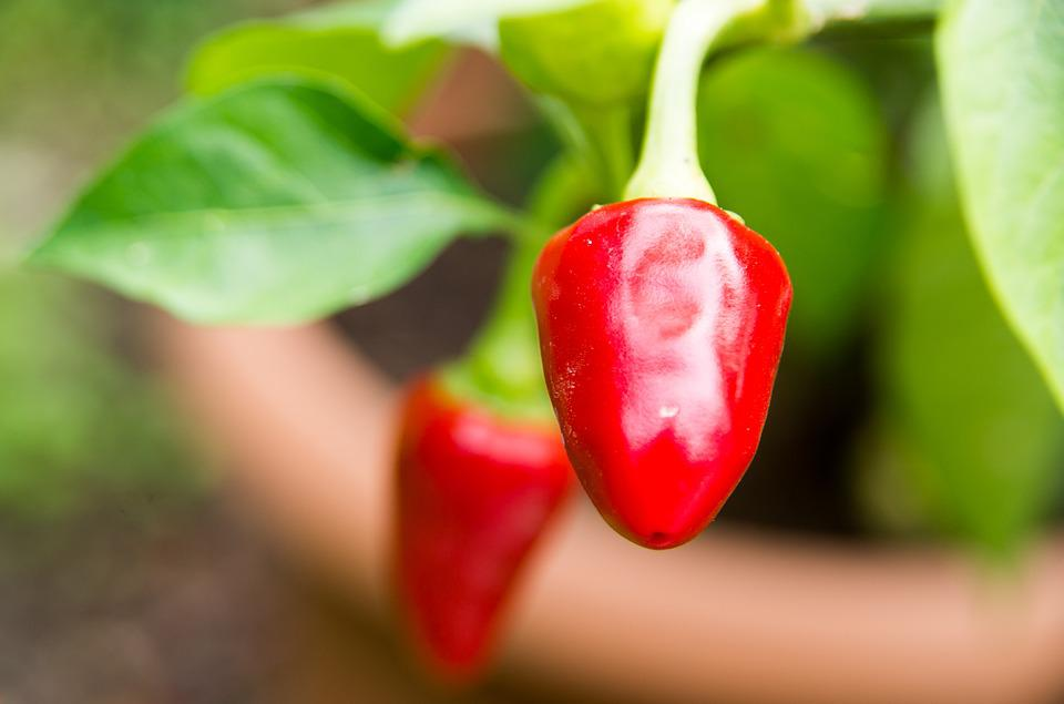 Chili Pepper, Chili, Peppers, Cooking, Pepper, Spicy