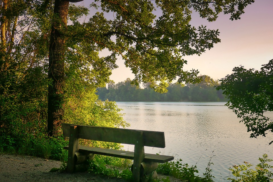 Tree, Nature, Wood, Bank, Lake, River, Rest, Chill Out