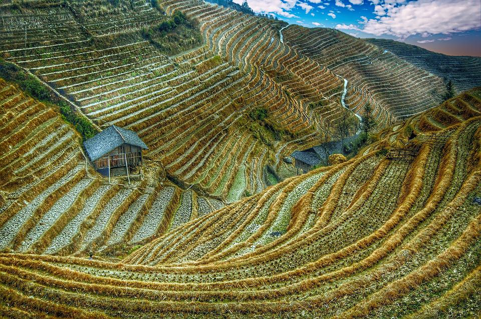 Rice Field, China, Asia, Rice, Rural, Terrace