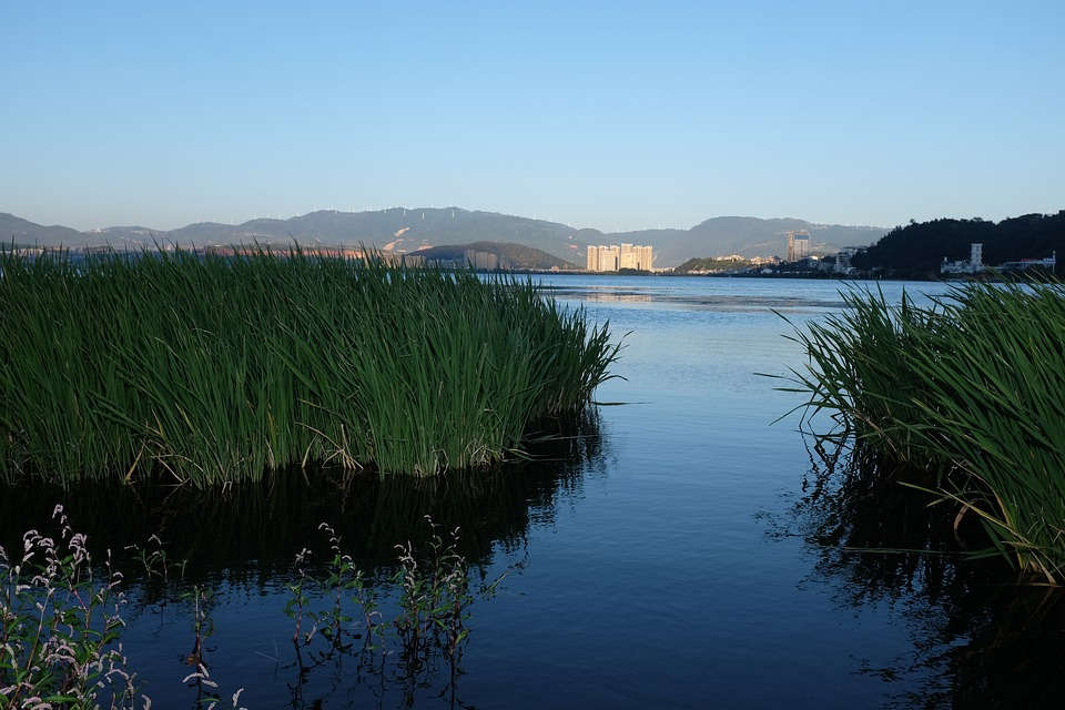 Dali, Lake, Reed, China, Evening