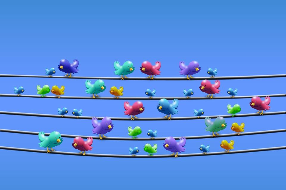 Twitter, Line, Power Line, Sit, Chirp, Tweet, Chirrup