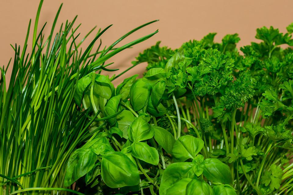 Cook, Herbs, Culinary Herbs, Chives, Basil, Parsley
