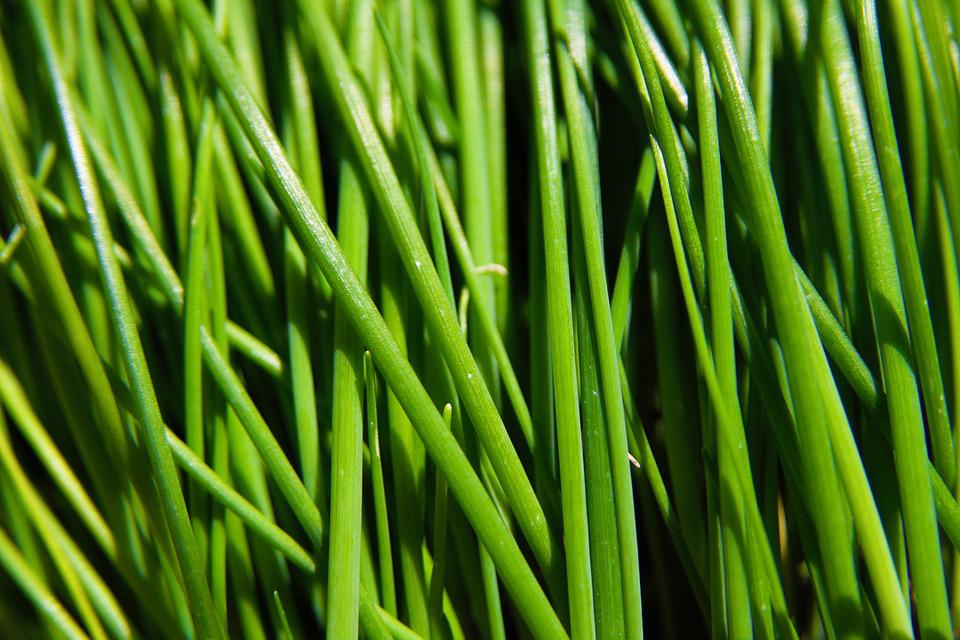 Chives, Green, Food, Grass, Macro, Nature, Outdoors
