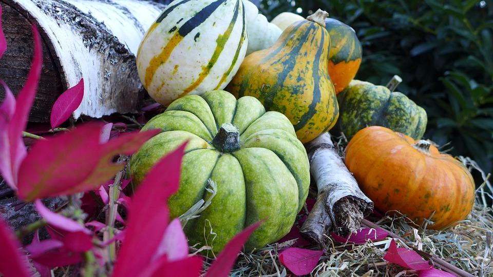 Pumpkin, Autumn, Decoration, Autumn Decoration, Choose
