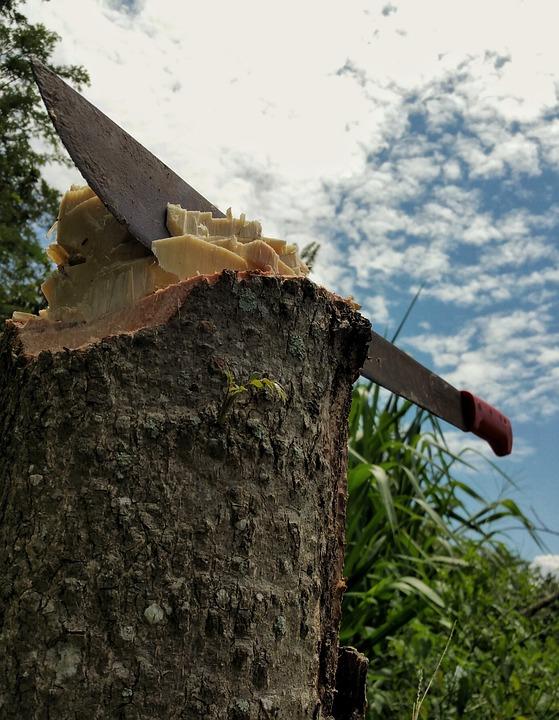Machete, Chop, Stump, Bark, Sky, Grass