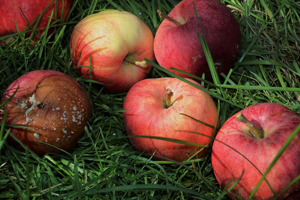 Chose, Apple, In The Fall, Fruit, Spoils, Sad, Collapse
