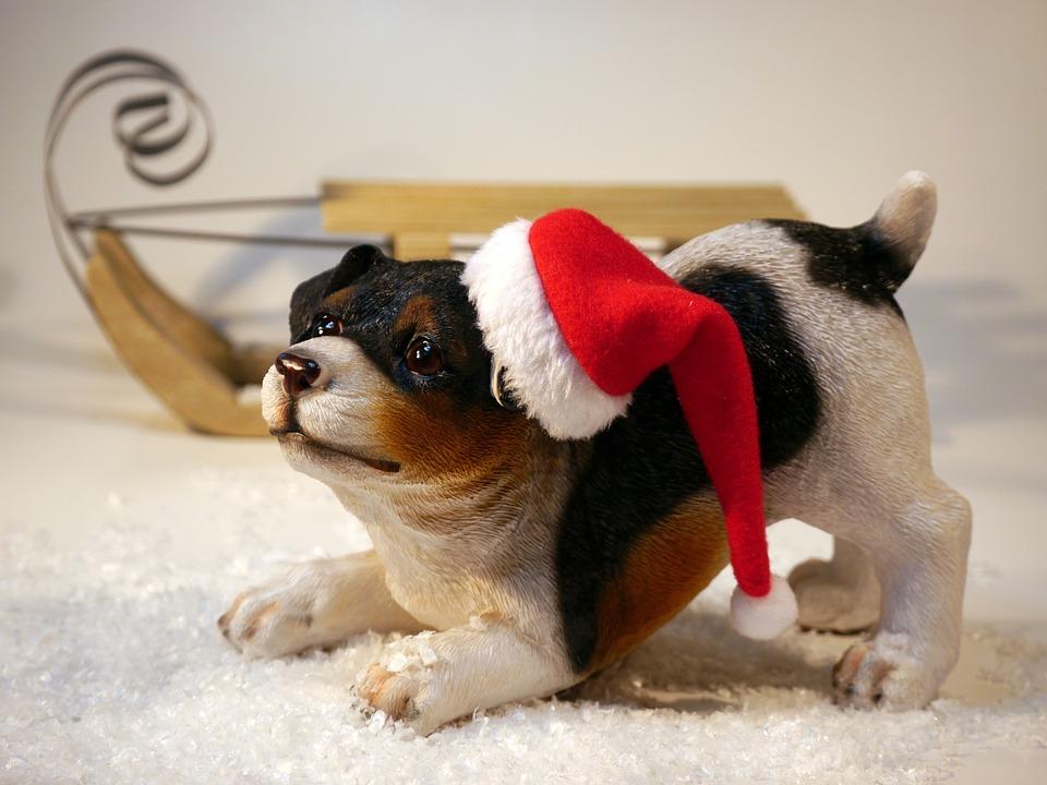 Christmas, Dog, Santa Hat, Slide, Christmas Time