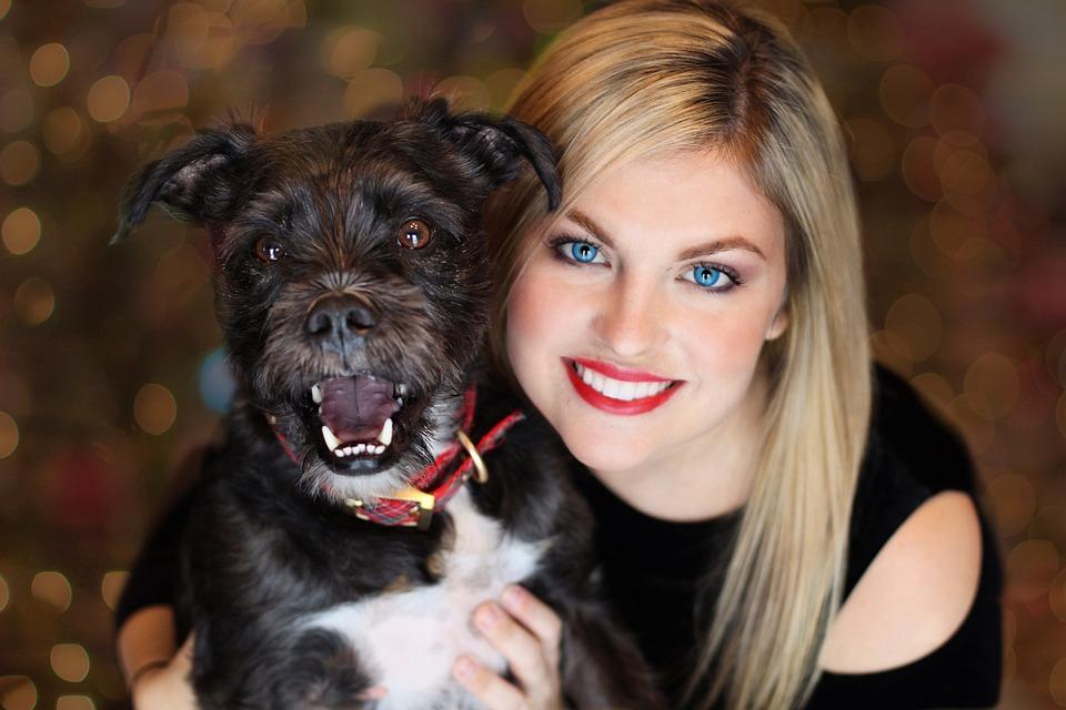 Pup, Dog, Pretty Girl, Christmas Dog, Christmas, Canine