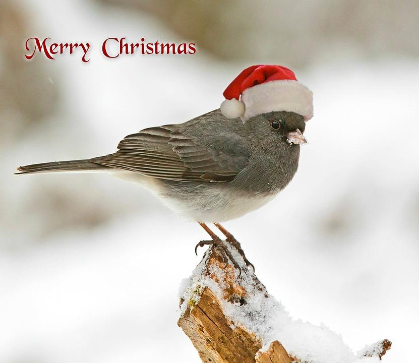 Christmas, Christmas Card, Christmas Greeting, Bird