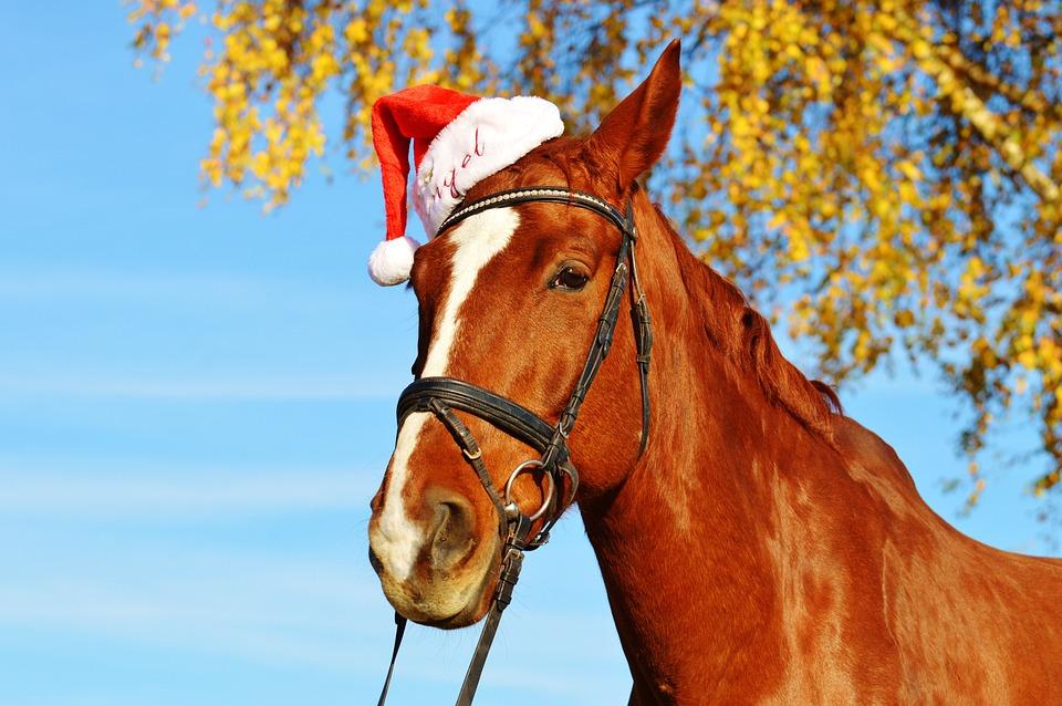 horse christmas santa hat funny animal ride - Christmas Horse