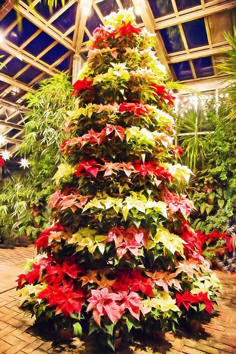 poinsettia tree poinsettias christmas lights