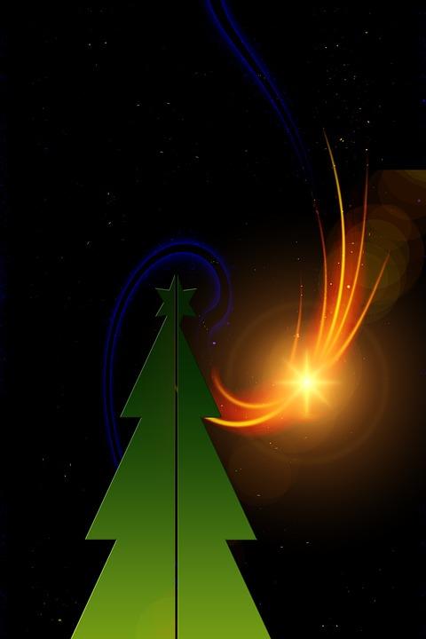 Advent, Star, Christmas, Christmas Tree, Poinsettia