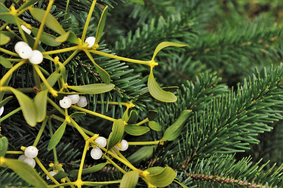 Christmas Tree, Mistletoe, Decoration, Dec