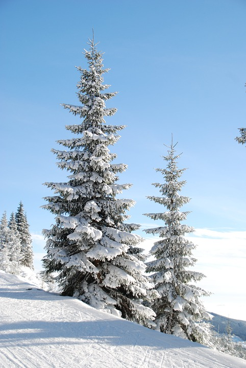 Winter, Snow, Tree, Den, Christmas Tree