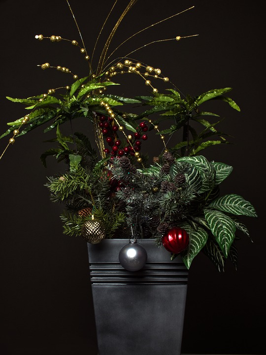 Christmas, Flowers, Winter, Celebration, Xmas