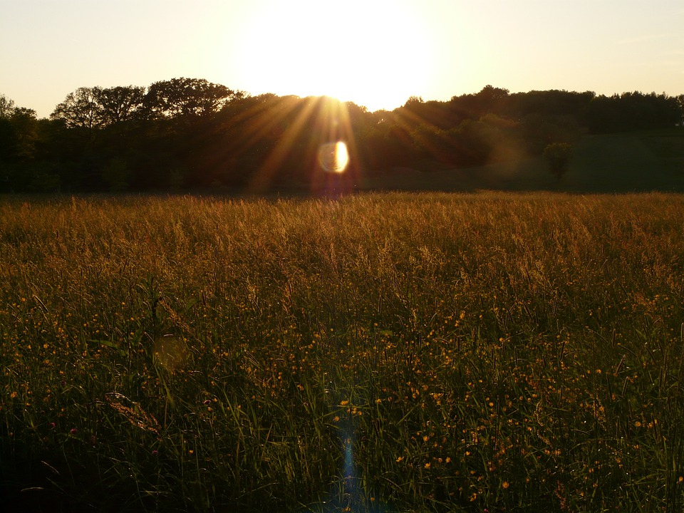 Nature, Landscape, Sunbeam, Meadow, Chuck Meadows
