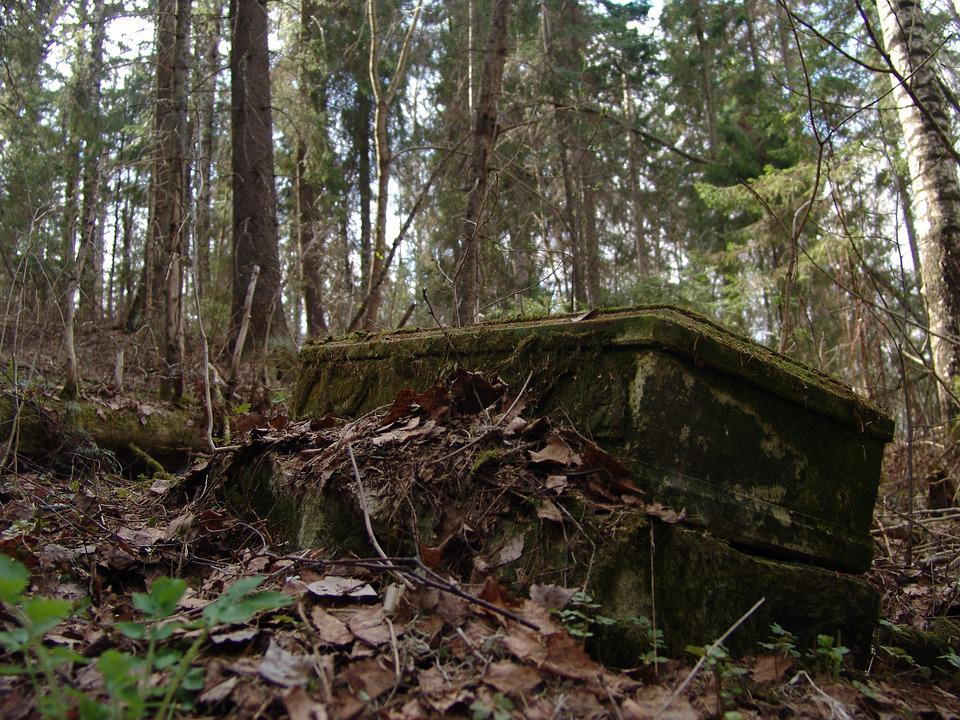 The Ruins Of The, Church, Forest