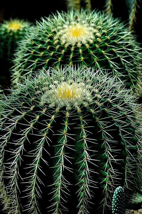 Cactus, Plant, Circles, Nature, Green, Flower, Natural