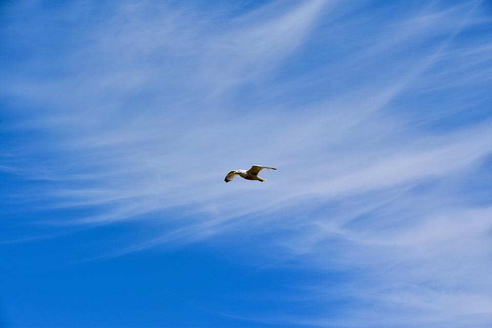 Seagull, Flight, Sky, Clouds, Cirrus, Cirrus Clouds