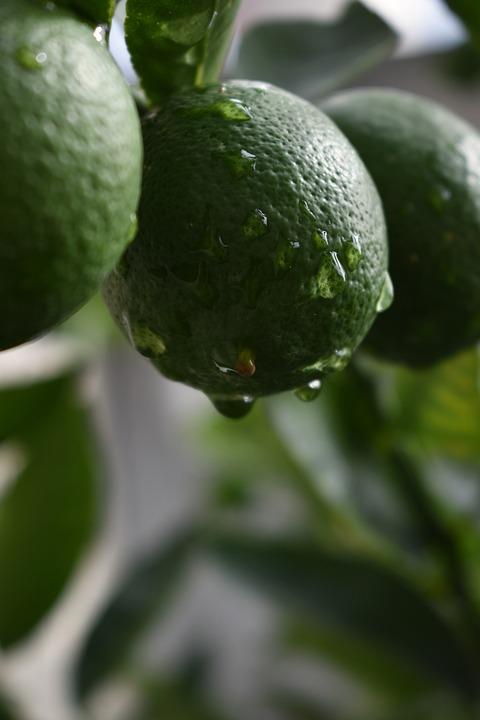 Lemon, Green, Fruit, Fresh, Citrus, Drops